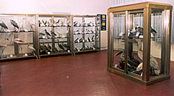 museo jesolo