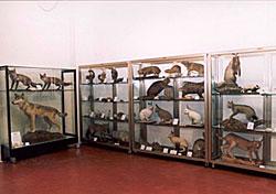 museo di jesolo