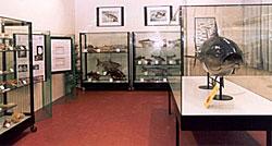 jesolo museo storia naturale